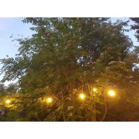 Vuokrattava lamppuketju vihreä 12,7m pitkä, lamput 50cm välein